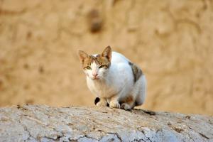 Horoskop pre mačky