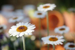 Význam darovaného kvetu podľa druhu a farby