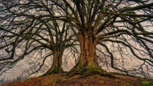 energia stromov