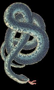 snake-3066876_640